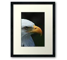 Beak and Eye of an Eagle Framed Print