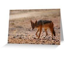 Black Back Jackal, Nambia, Africa Greeting Card
