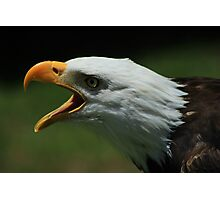 Bald Eagle Chirping Photographic Print