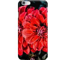 A Nice Red Dahlias iPhone Case/Skin
