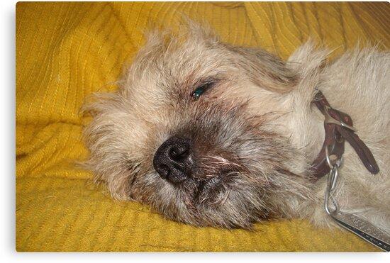 Sleepy....Soooo sleeeepy.... by May Lattanzio