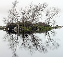 Island of trees in the mist by Grant Glendinning