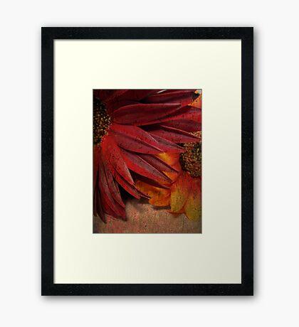 Textured Petals Framed Print