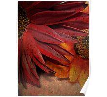 Textured Petals Poster