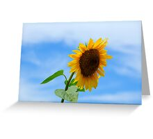 Lonely Sunflower Greeting Card