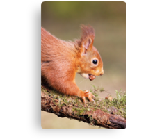 Red Squirrel on log Canvas Print