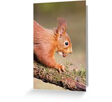 Red Squirrel on log Greeting Card