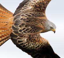 Raptor soaring Sticker