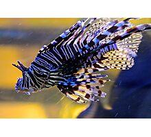 Zebra Fish - Ho Chi Minh City, Vietnam. Photographic Print