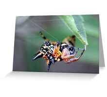 Jewel spider Greeting Card