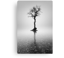 Loch Lomond Tree in the mist Canvas Print