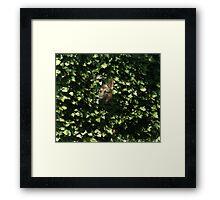 Hiding In The Brush Framed Print