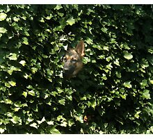 Hiding In The Brush Photographic Print