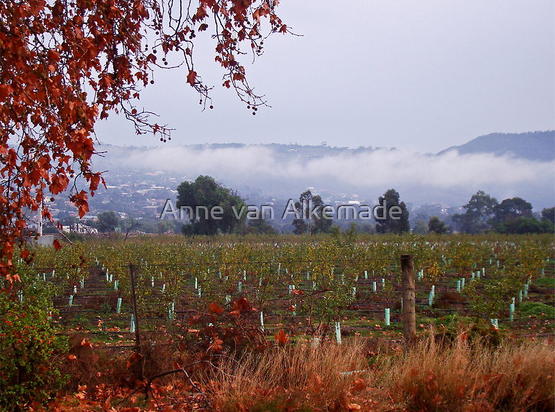 Darley in the fog by Anne van Alkemade