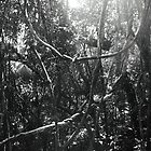 Vines in the Brazilian Rainforest by 1001pawprints