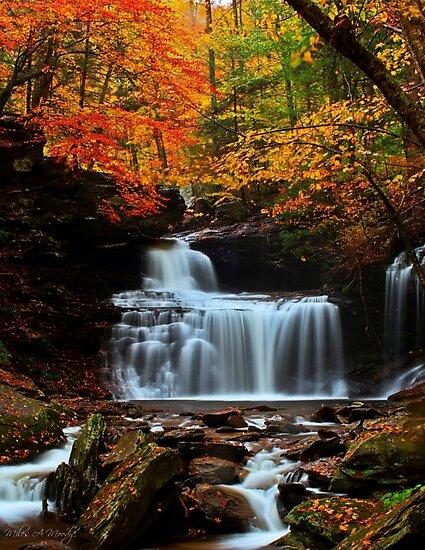 R B Rickets Falls by Miles Moody