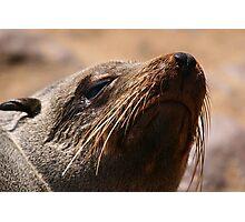 Fur Seal, Cape Cross, Namibia Photographic Print