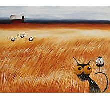 Stressie cat and the crows in the hay fields Photographic Print