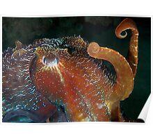 Cuttlefish 2 Poster