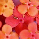 Orange Flowers by NicoleConrau