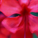 Pink Flower #2 by NicoleConrau