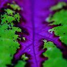 Purple Leaf by NicoleConrau