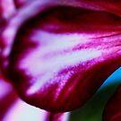 Red Petal by NicoleConrau