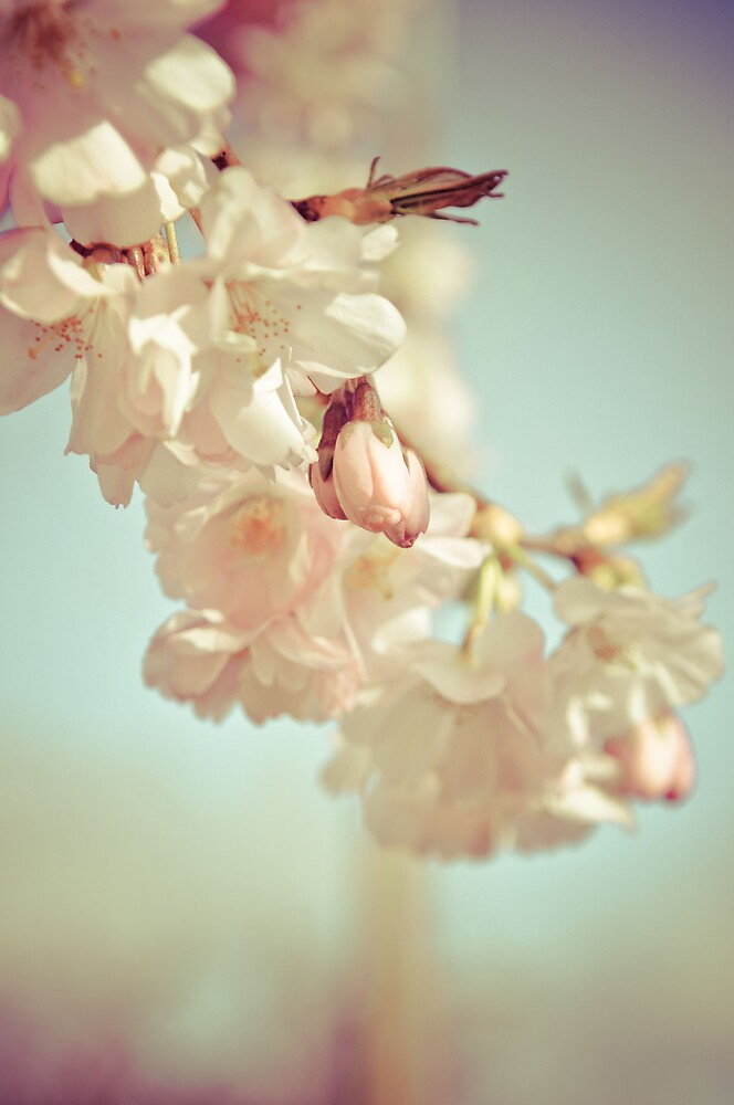Blossom by Pat Shawyer