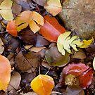 Autumn by Karen Rich