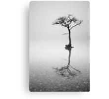 Lone Tree in the Mist Canvas Print