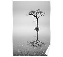 Lone Tree in the Mist Poster