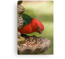 King Parrot Metal Print