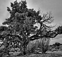 Old tree by the Great Salt Lake in Utah by Alan Mitchell