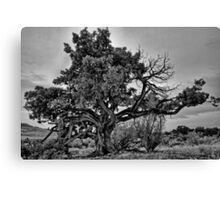 Old tree by the Great Salt Lake in Utah Canvas Print