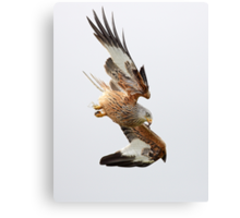 Raptor Diving Canvas Print