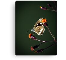 My Favourite Picture Canvas Print