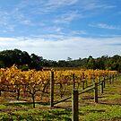 Beautiful Wineries by Hughsey