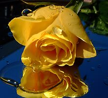 Yellow Rose by Ann Persse