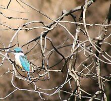 Australian - Azure Kingfisher by Veilstreasures