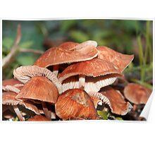 Fungi Season 25 Poster