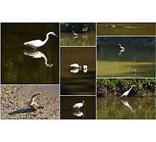 6 mile cypress :Florida  Environmental Collage  Photographic Print