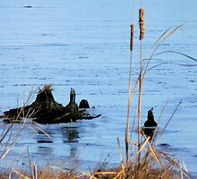 Blackwater Ice by Hope Ledebur