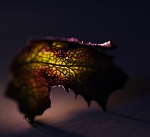 A leaf by HelenaBrophy