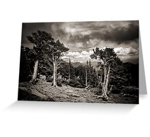 The Living Forest Greeting Card