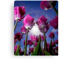 Field of Tulips Canvas Print