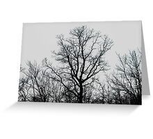 back and white tree Greeting Card