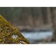 Moss Grows Here Photographic Print