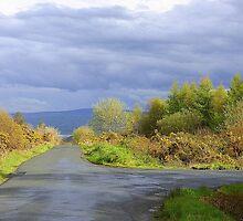 Rain Clouds And Gorse.................................Ireland by Fara