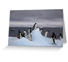 Beautiful Adelie Penguin