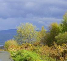 Rain Clouds And Gorse.................................Ireland Sticker